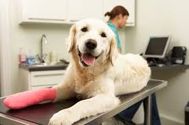 dog with cast