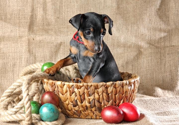 009_Easter-dog